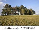 Scots Pine Trees   Pinus...