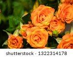 rose flowers for calendar and... | Shutterstock . vector #1322314178