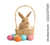 adorable furry easter bunny in... | Shutterstock . vector #1322337035
