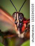 Butterfly Face Macro