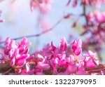 spring background with pink... | Shutterstock . vector #1322379095