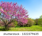 park with blooming trees and... | Shutterstock . vector #1322379635