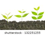 ideas growth plant in white... | Shutterstock . vector #132251255
