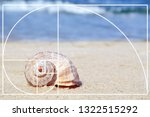 Fibonacci Spiral And Seashell...