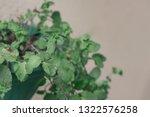fresh spearmint vase in modern... | Shutterstock . vector #1322576258