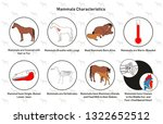 Mammals Characteristics infographic diagram including hair fur covering lung born alive warm blooded single boned lower jaw vertebrates mammary gland middle ear and heart for biology science education