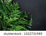 spring concept. green fern... | Shutterstock . vector #1322731985
