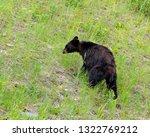 black bear in glacier national...   Shutterstock . vector #1322769212