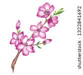 watercolor cherry blossom branch | Shutterstock . vector #1322841692
