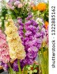 hoary stock or matthiola incana ... | Shutterstock . vector #1322885162