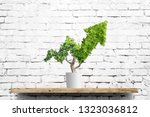 potted green plant grows up in... | Shutterstock . vector #1323036812
