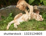 two red little kittens playing... | Shutterstock . vector #1323124805