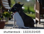 Stock photo  silhouette of a sitting dog 1323131435