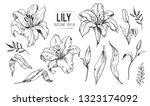 lilies sketch. set of lilies... | Shutterstock .eps vector #1323174092