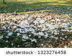 White Fluff On Green Grass