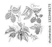 sprig of hop decorative sketch...   Shutterstock .eps vector #1323448175