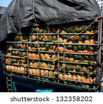 Small photo of Pineapple Pandemonium in truck, Fruit concept