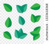 mint leaf vector illustration.... | Shutterstock .eps vector #1323618368