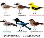 Cute bird vector illustration set, Nutcracker, Oriole, Marsh tit, Magpie, Penduline tit, Eurasian jay, Colorful European bird cartoon collection