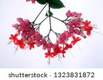 high quality image ...   Shutterstock . vector #1323831872
