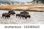 Buffalo In Yellowstone Nationa...