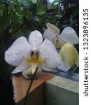 One Type Of Orchid Is Quite...
