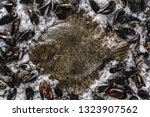 raw whole flounder fish on raw... | Shutterstock . vector #1323907562