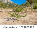 little pine tree planted in the ... | Shutterstock . vector #1324005422