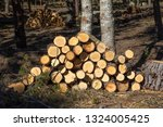 piles of wooden logs  stacked... | Shutterstock . vector #1324005425