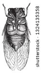 cicada seen below  vintage...   Shutterstock .eps vector #1324135358
