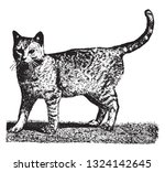the domestic cat  vintage... | Shutterstock .eps vector #1324142645