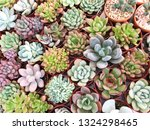 collection of small decorative... | Shutterstock . vector #1324298465