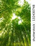 bamboo forest  | Shutterstock . vector #132430748