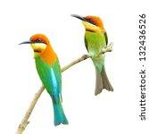 couple of bee eater bird on... | Shutterstock . vector #132436526