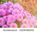 image of beautiful flowers on... | Shutterstock . vector #1324458242