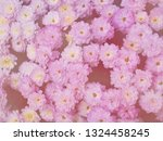 image of beautiful flowers on... | Shutterstock . vector #1324458245