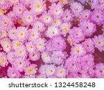 image of beautiful flowers on... | Shutterstock . vector #1324458248