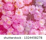 image of beautiful flowers on... | Shutterstock . vector #1324458278