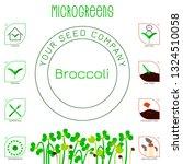 microgreens broccoli. seed... | Shutterstock .eps vector #1324510058