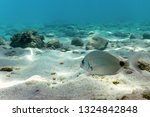 Sandy Bottom  Fish Swimming...