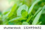 close up organic mint spearmint ... | Shutterstock . vector #1324954652