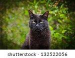 Stock photo black cat in nature 132522056