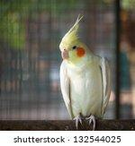 Close Up Bird Nymphicus...