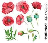 set of watercolor poppies and... | Shutterstock . vector #1325732612