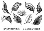sketch hand drawn set coffee... | Shutterstock .eps vector #1325899085
