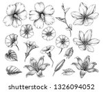hand drawn set of hibiscus ... | Shutterstock . vector #1326094052
