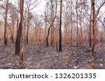 forest fires  burning deciduous ... | Shutterstock . vector #1326201335