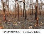 forest fires  burning deciduous ... | Shutterstock . vector #1326201338