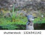 white wagtail or motacilla alba.... | Shutterstock . vector #1326541142