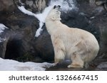 polar bear deftly bent up ... | Shutterstock . vector #1326667415